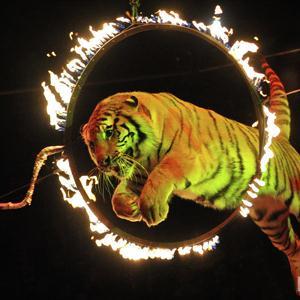 Цирки Лысых Гор