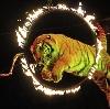 Цирки в Лысых Горах