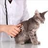 Ветеринарные клиники в Лысых Горах
